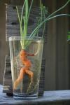 Marathon carrot on the move