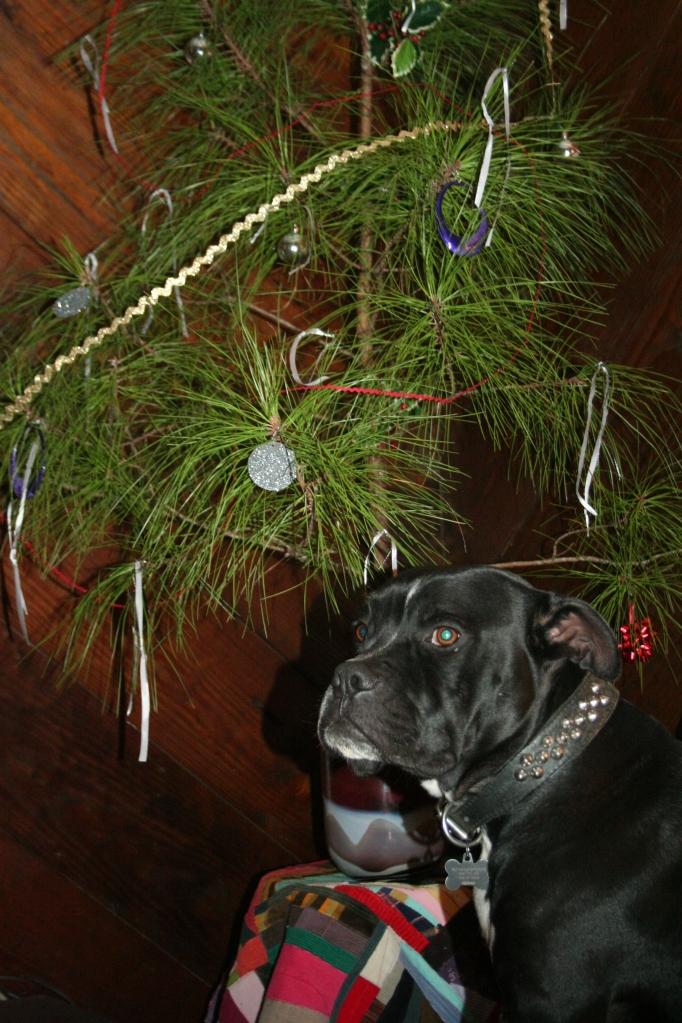 Otis under the Charlie brown xmas tree