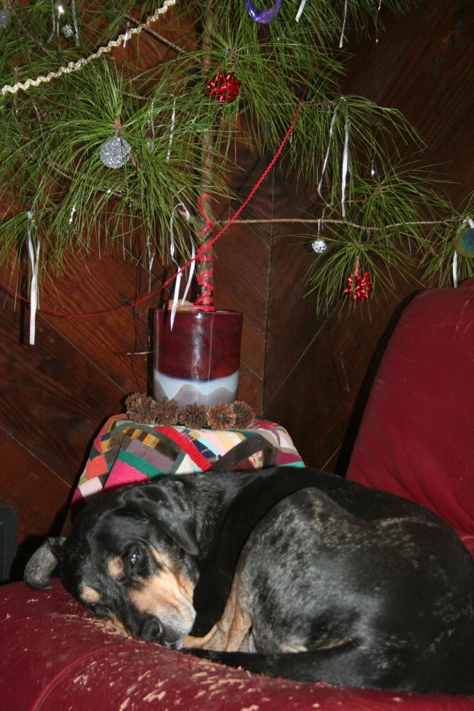 A hound dog under the xmas tree