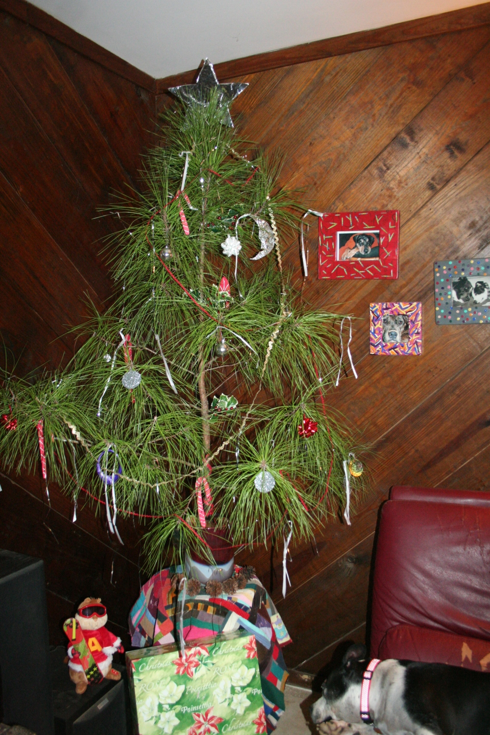 Alvin and our Charlie Brown xmas tree with the Tink