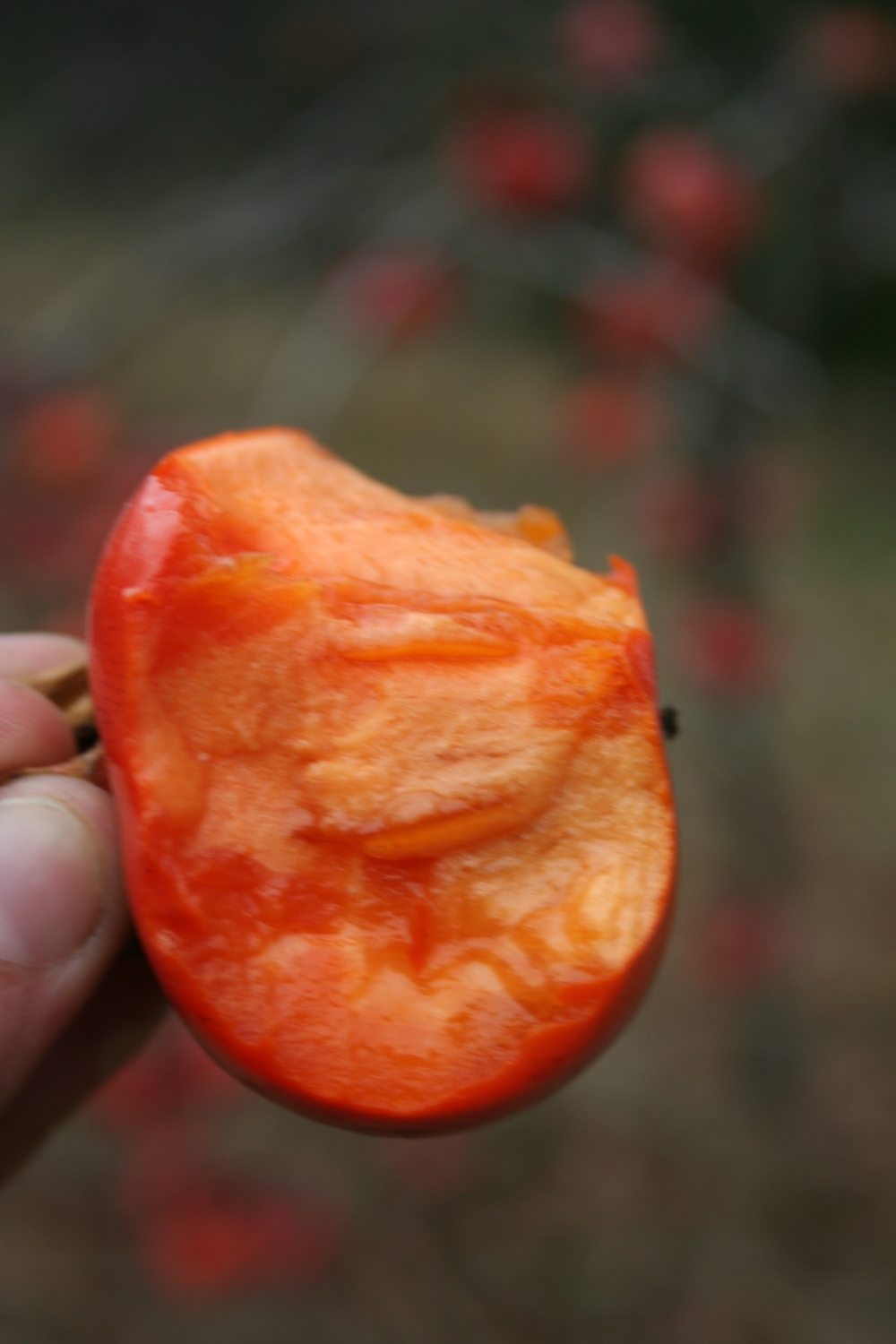 Flesh of the Japanese persimmon