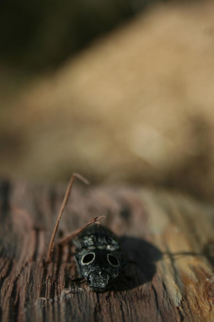 Mr Beetle